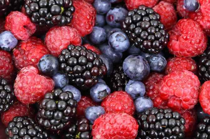 food forest blueberries raspberries
